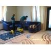 Качественно чистим мягкую мебель
