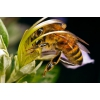 Видеопасека 1 - 2 мир пчеловода